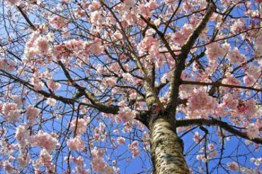 printemps 370x247 - Cachem.fr - L'heure du bilan (avril 2010)