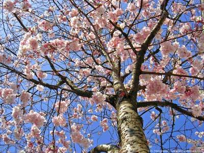 printemps - Cachem.fr - L'heure du bilan (avril 2010)