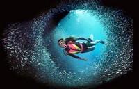 scuba diving - Plongée sous-marine