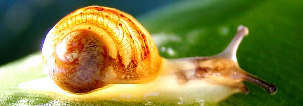 vitesse internet escargot