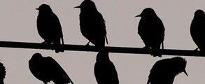 bandeau oiseau 293x120 - Angry Birds Space débarquent le 22 mars