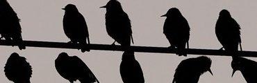 bandeau oiseau 370x120 - Angry Birds Space débarquent le 22 mars