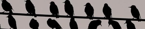 bandeau oiseau - Angry Birds Space débarquent le 22 mars