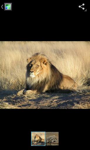 lion gallery ics - Gallery ICS disponible pour tous...