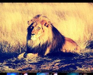 retouche lion gallery ics1 307x247 - Gallery ICS disponible pour tous...