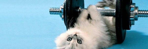 chat poids fitness sport - Test du pèse personne Terraillon Web Coach