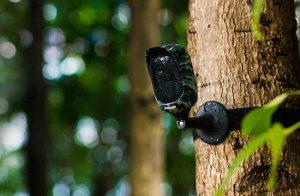 Argus camouflage 300x196 - Reolink Argus, test de la caméra IP sans fil