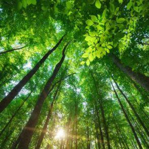 arbres 293x293 - Publicité... et s'il suffisait de demander ?