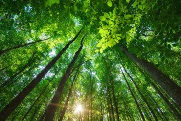 arbres 370x247 - Publicité... et s'il suffisait de demander ?