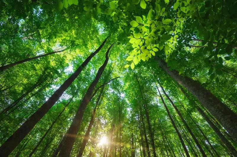 arbres - Publicité... et s'il suffisait de demander ?