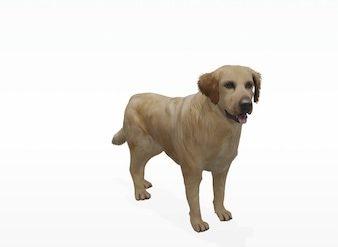 Golden 3D 338x247 - Android / iOS : Retrouvez-vous face à face avec cet animal